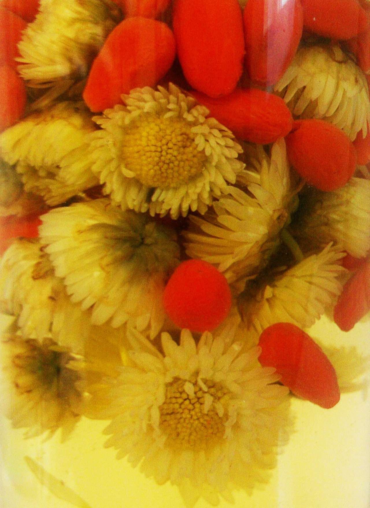 JU HUA or CHRYSANTHEMUM FLOWER