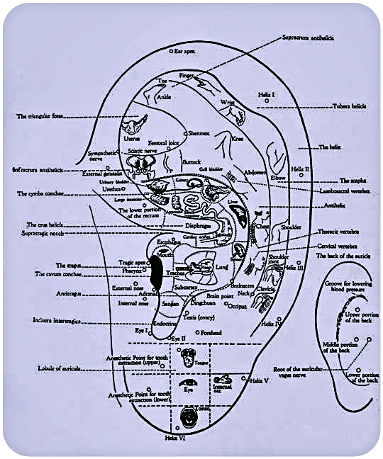 www.ElementalChanges.com Ear Acupuncture Map